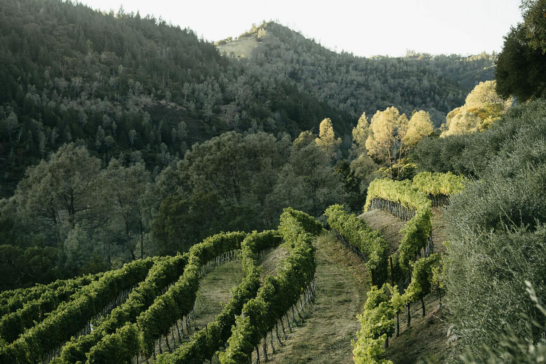 Cimarossa Vineyard