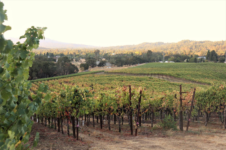 Kick vineyard