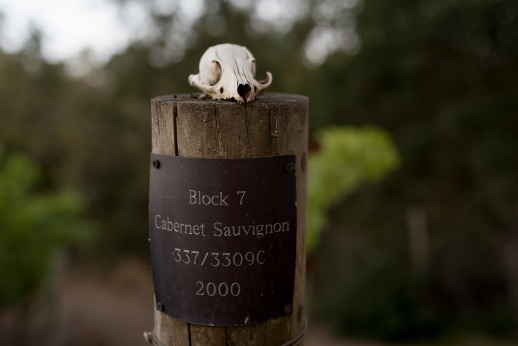 Black Magic Vineyard post with animal skull